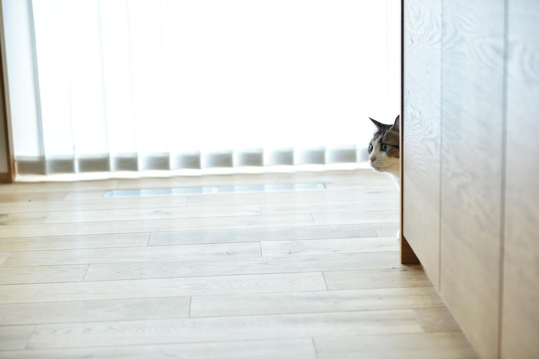 「愛猫と暮らす2Fリビングの家」構造見学会